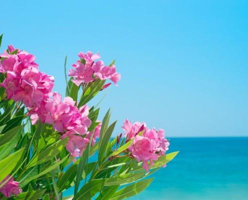 hotel sul mare famiglia 25 aprile offerte